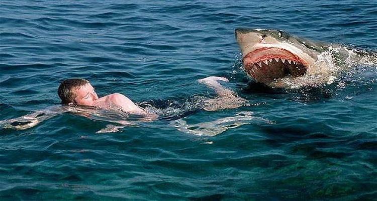 الشرطة تحذر : هذه هي الأماكن التي تتواجد بها أسماك القرش في مصايف هذا العام