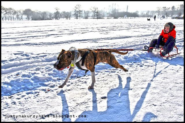 Justyna Kurzyńska zdjęcie fotograf fotografia zima