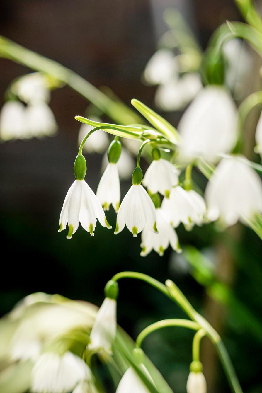 lifestyle-blog-nature-photography-spring