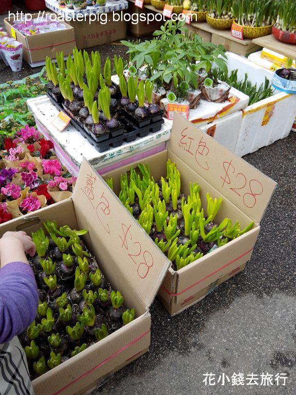 旺角花墟花市種類