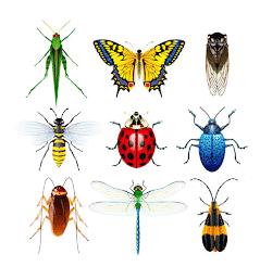 16++ Contoh gambar hewan serangga terupdate