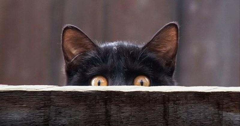 Все о братьях наших меньших: Суеверия и приметы о кошках ...