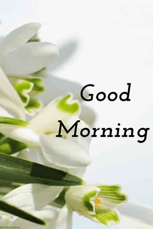 good morning hd with white flowers