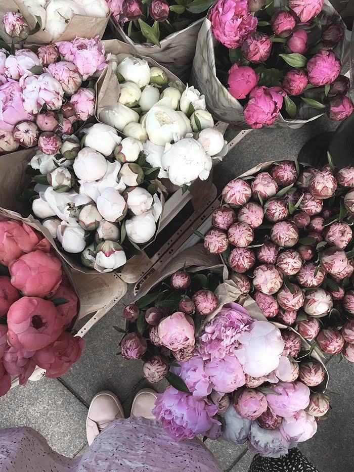 Tallinna, kukat, pionikimppuja, Annan tirpat