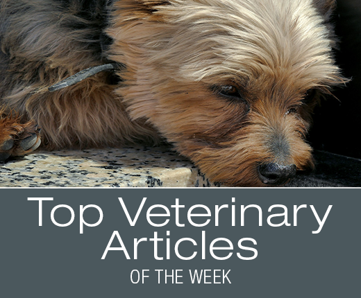 Top Veterinary Articles of the Week: Kennel Cough, Circovirus, and more ...
