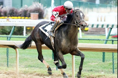 McCracken derby horse