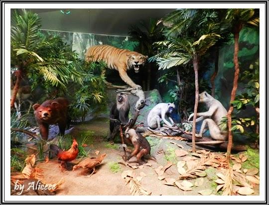 muzeul-antipa-bucuresti-animale