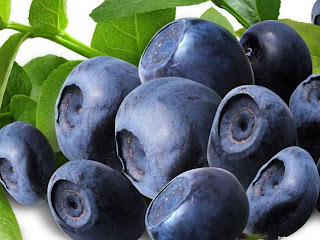 Blueberry fruit images wallpaper