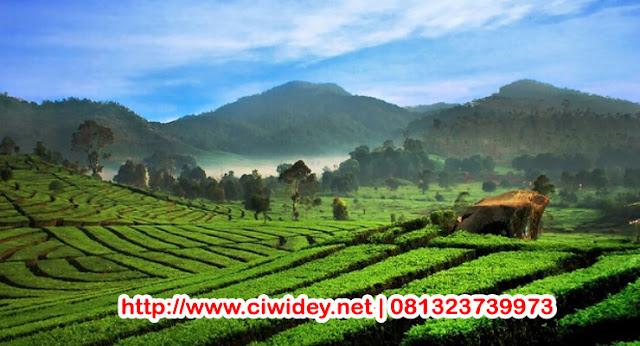 Ciwidey Village | More Info 081323739973