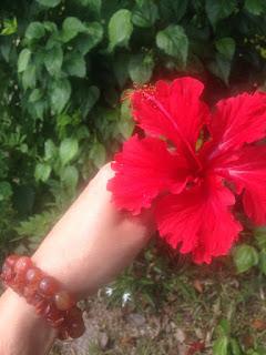 aide leit-lepmets indoneesia inspiratsioon hibiskus