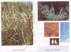 طرق مقاومة الحشائش في الزراعة العضوية
