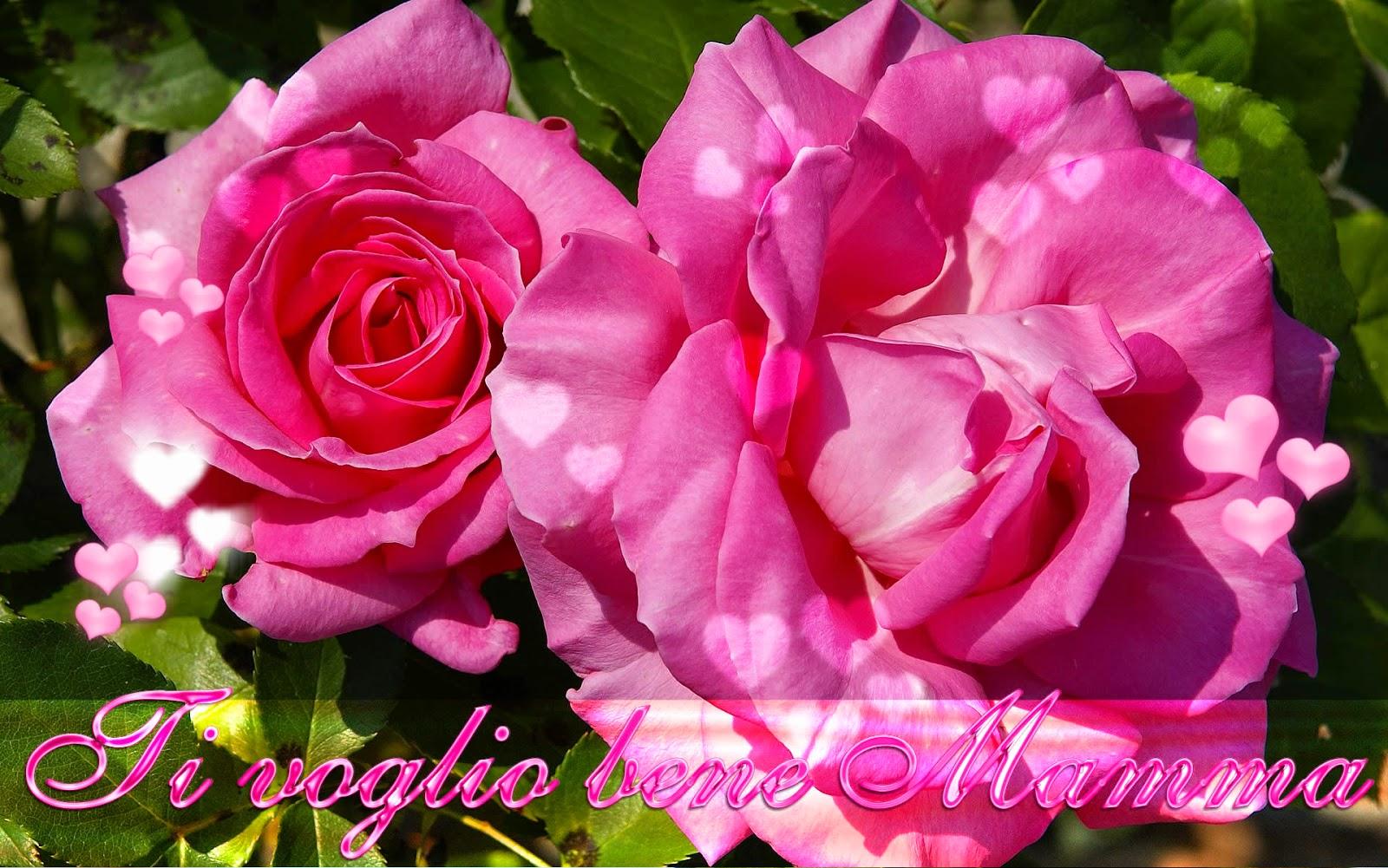 Il mio giardino incantato buona festa della for Foto di rose bellissime