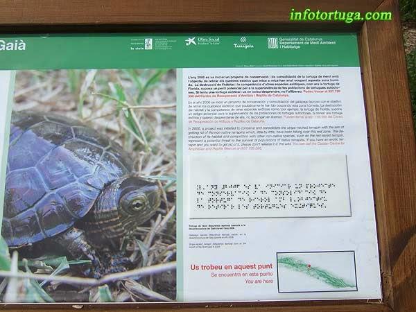 Informació sobre el projecte de recuperació de la tortuga de rierol