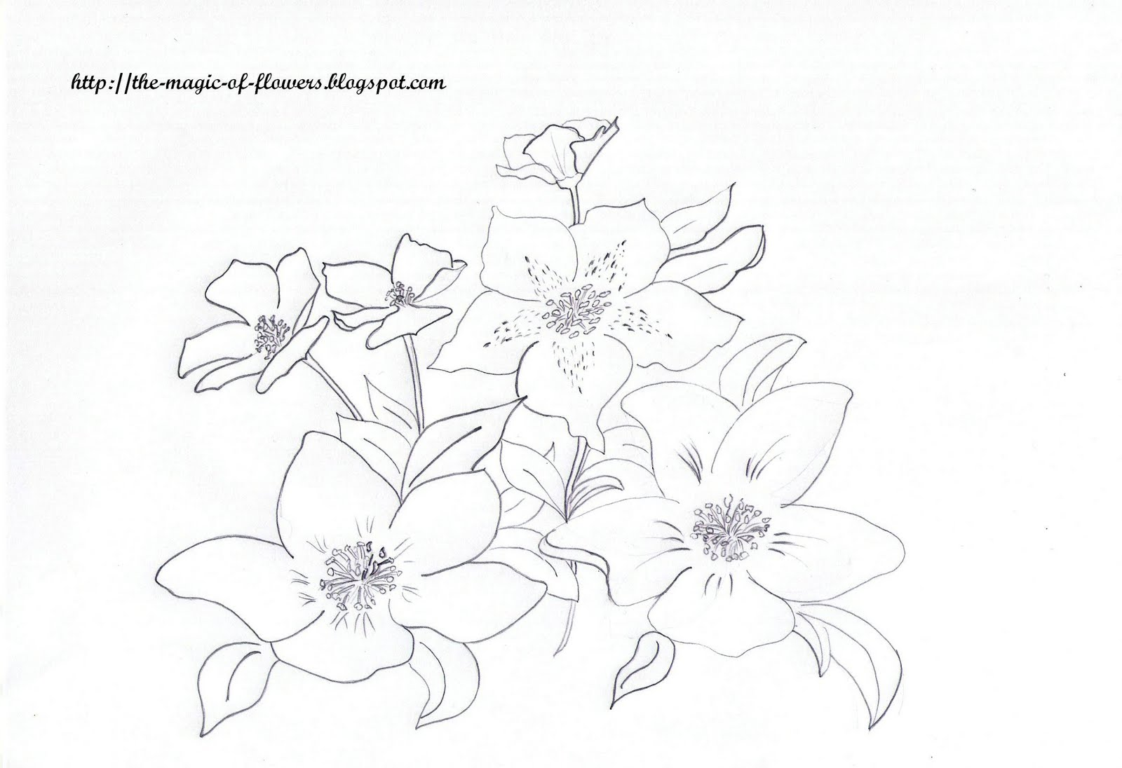Say It With Flowers Free Flower Coloring Pages: Say It With Flowers: Free Flower Coloring Pages