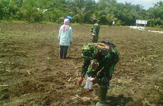 Babinsa Serda S.Tarigan Bantu Petani Menanam Jagung di Dusun II Sawit Rejo