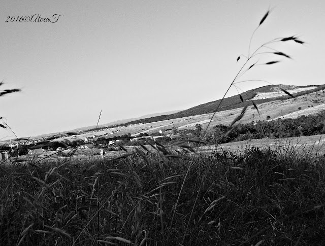 Summer aspects at countryside in july, 2014. B&W view.