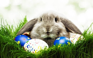 Easter 2017 Bunny Pictures