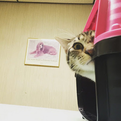 http://kongxie.blogspot.my/2017/06/koleksi-kerenah-dan-reaksi-muka-kucing.html