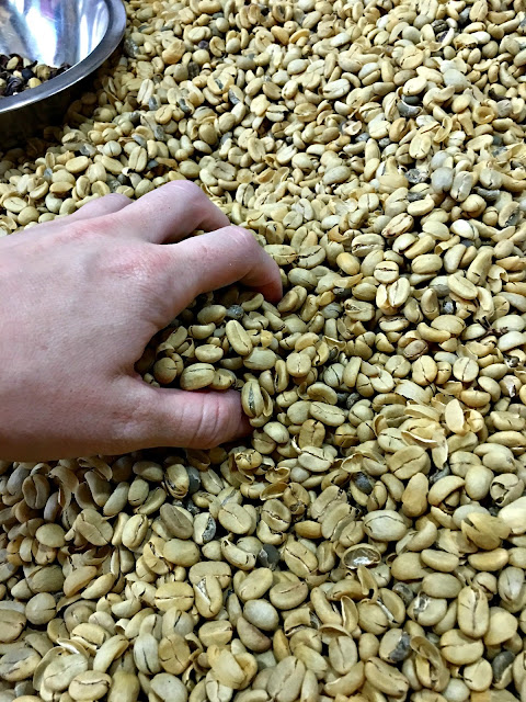 Sorting coffee beans in Guatemala - How Guatemala taught me to really love my neighbor