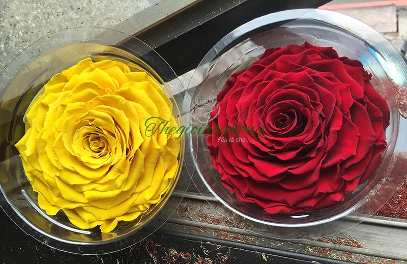 Shop bán hoa hồng bất tử tại TPHCM