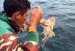 Double Strike Mancing Ikan Jarang Gigi Besar Mantap