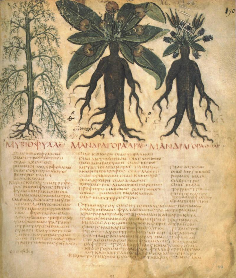 Página manuscrita por Dioscórides