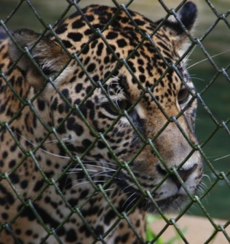 Quick Guide to the Bosque Guarani Zoo