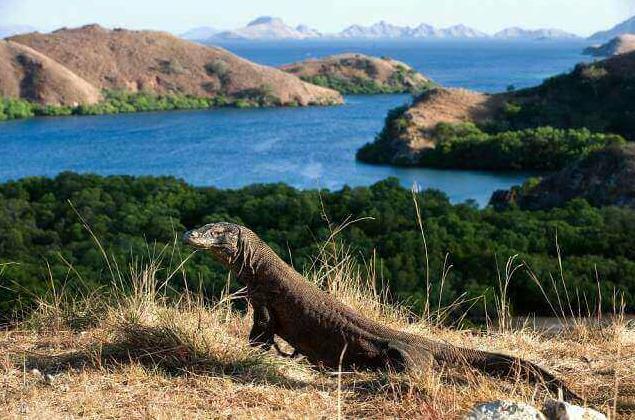 pulau komodo indonesia