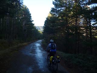 Pinares en la antigua carretera