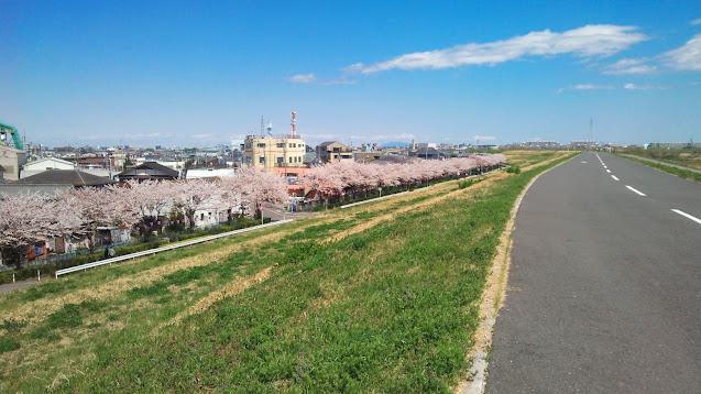 江戸川右岸河口の葛西から利根川との分岐点である関宿まで遡り、左岸に渡って流山まで下るサイクリングコース