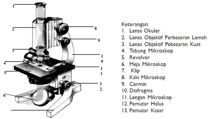 Gambar Bagian-bagian Mikroskop Beserta Fungsinya ...