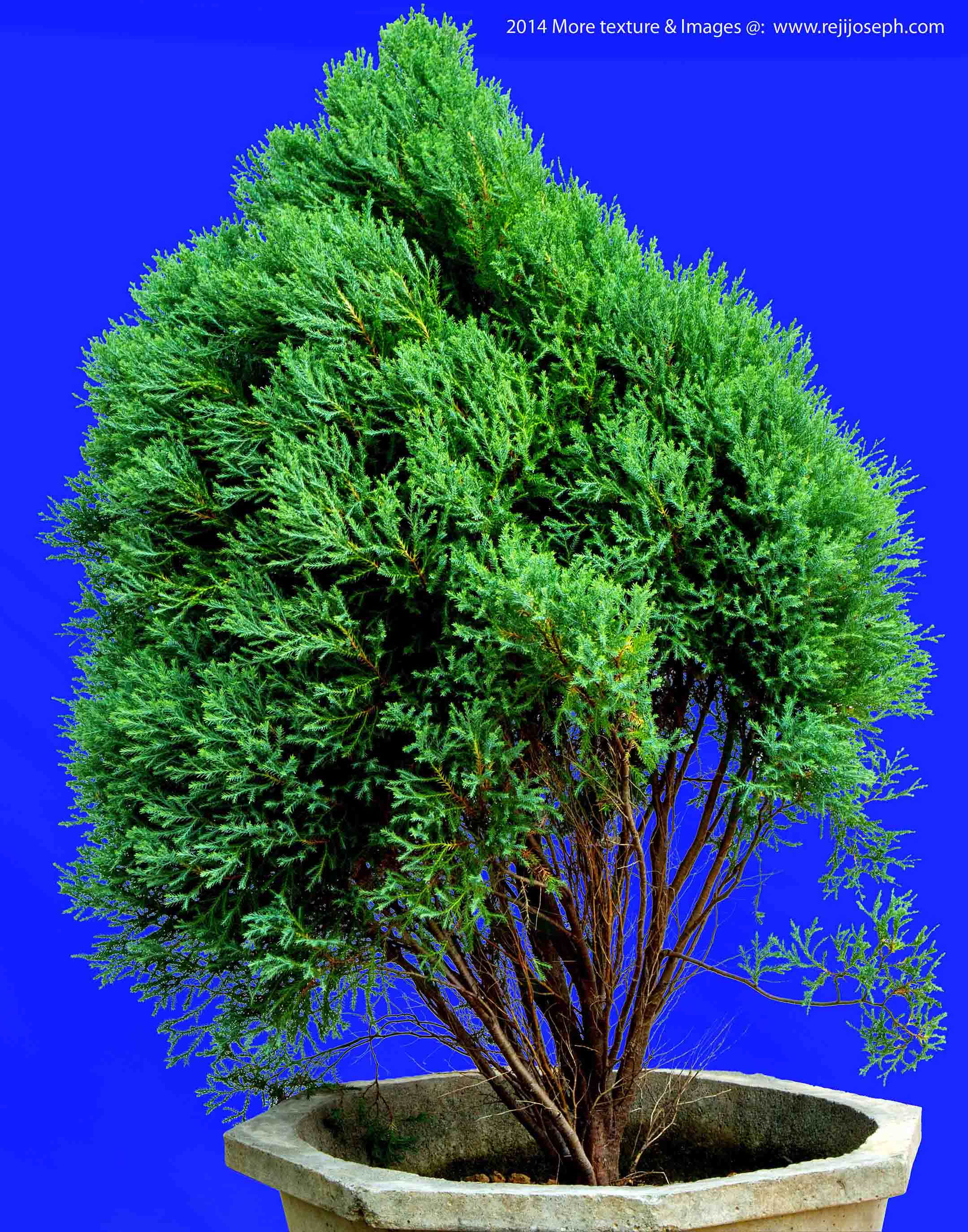 Garden Plant texture 000021