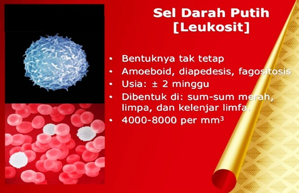 Pengobatan Alami leukosit tinggi akibat infeksi Dari Dokter