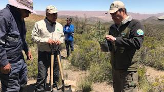 Reforestación de 10 héctareas de bosque de Queñoa en Arica y Parinacota