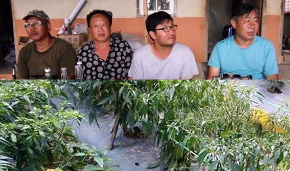 Soal Imigran Cina Tanam Benih Cabai Berbakteri, Yusril: Itu Bukan Petani Biasa