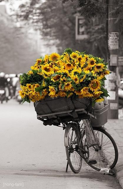 LA FOTO DE HOY: sunflowers. 1