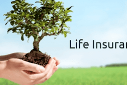 The History of Life Insurance