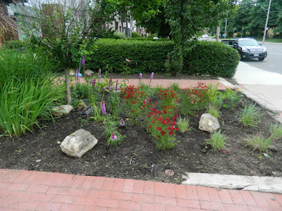 Avenue Road Toronto Front Garden Cleanup After Paul Jung Gardening Services