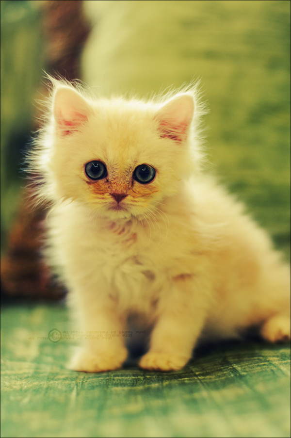 Cute Cats #3 - Pets Cute and Docile