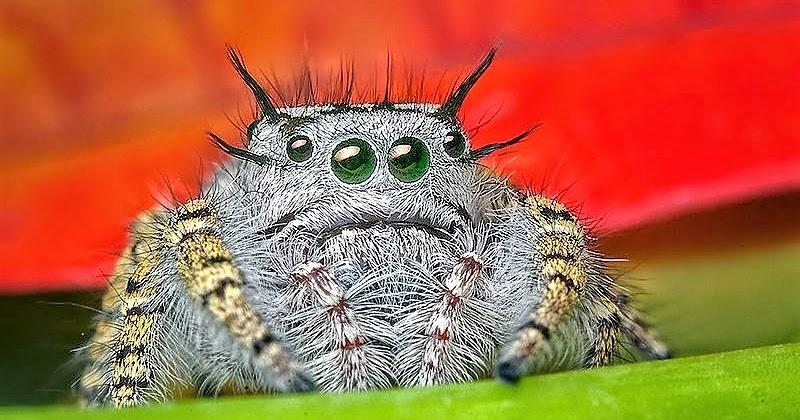 Fieggentrio waarom heeft een spin meerdere ogen for Hoeveel traptreden heeft een trap