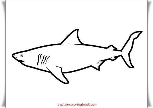 Sharks coloring pages free