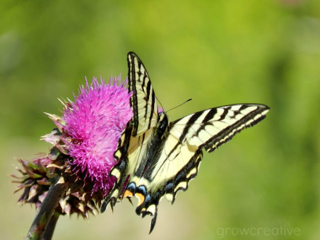 yellow and black butterfly photo: growcreativeblog