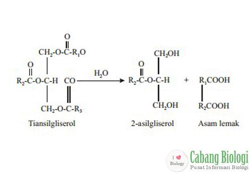 Proses Metabolisme Organisme