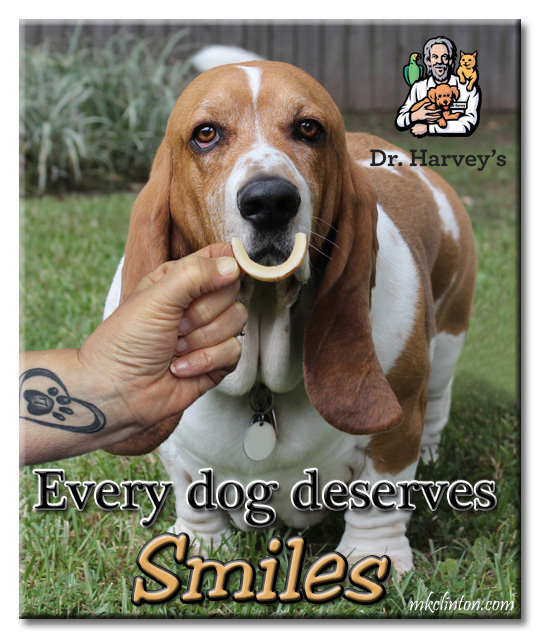 Basset Hound with Dr. Harvey's Coconut Smile in front of mouth