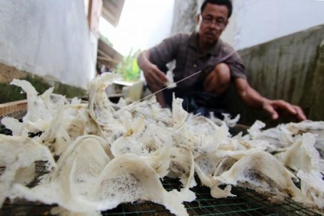 Bertahun-tahun Perda Walet boleh dibilang mangkrak.  Belakangan Pemko Banjarbaru kembali melirik potensi pendapatan dari sektor ini.