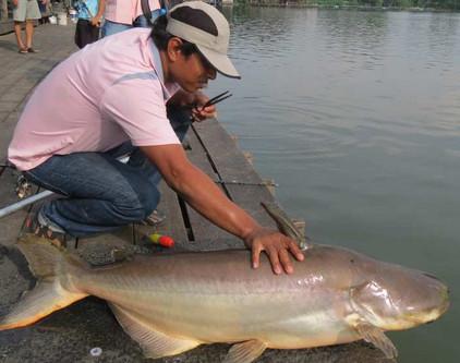 Cara Meracik Umpan Mancing Ikan Patin Galatama Siang Hari Malam Mancing Ikan Terbesar