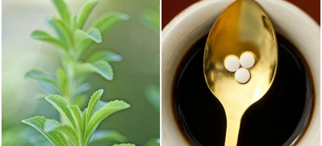 Στέβια το ακίνδυνο φυτό που αντικαθιστά τη ζάχαρη -Πώς φτάνει στο πιάτο μας, σε τι μας ωφελεί