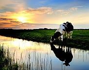 Cover foto Landbouw en de KRW-opgave voor nutrienten in regionale wateren