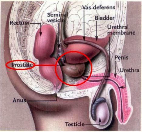 Adenom de prostata si viata sexuala
