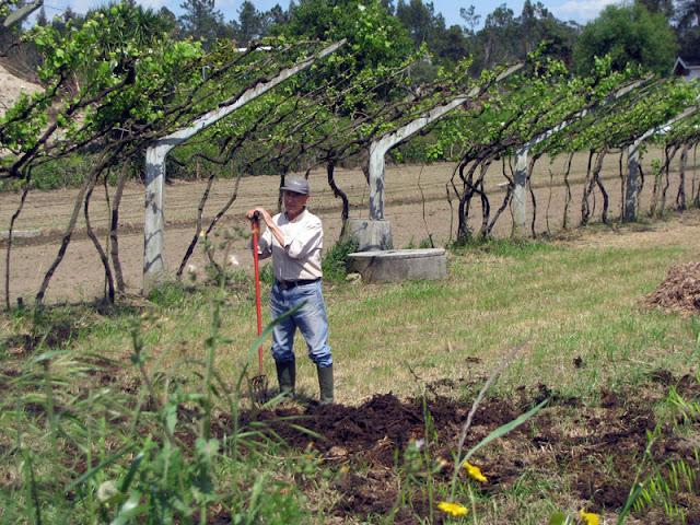 trabalhador rural segurando uma enxada